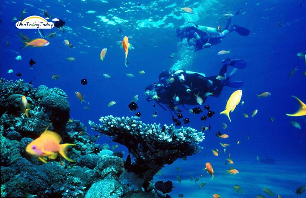 Dịch Vụ Lặn Biển Ngắm San Hô Tại Hòn Mun